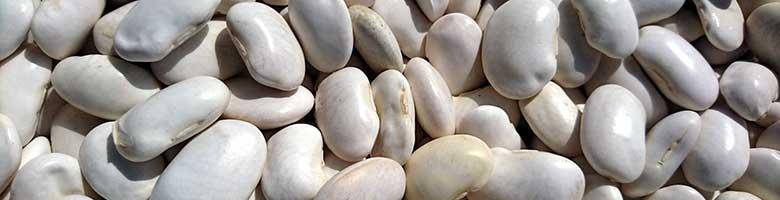 Witte bonen bevatten 24 mg magnesium per 100 gram